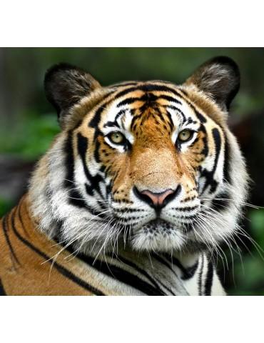 Tiger balsem Baume musculaire 3 pieces 200 gr
